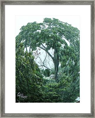 Framed Print featuring the photograph Tree Swirl Downpour by Glenn Feron