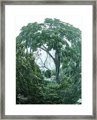 Tree Swirl Downpour Framed Print by Glenn Feron
