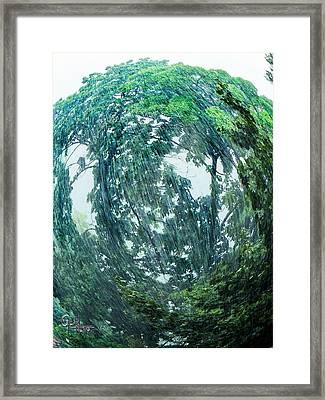 Tree Swirl Heavy Rain  Framed Print