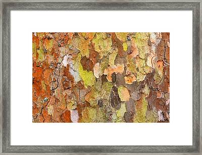 Tree Texture Framed Print