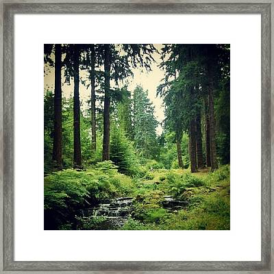 #tree #treeporn #tree_collection Framed Print