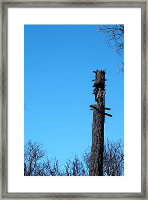 Tree Trunk Burned Framed Print by Naxart Studio