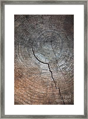 Tree Trunk Framed Print by Carlos Caetano