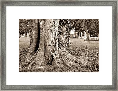Tree Trunk Framed Print by Tom Gowanlock