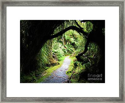 Framed Print featuring the photograph Tree Tunnel by Michele Penner