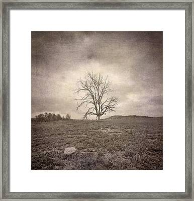 Tree Under The Rain Framed Print by Guido Montanes Castillo