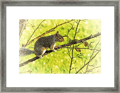 Tree Visitor Framed Print by Karol Livote