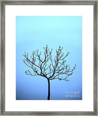 Tree With The Blues Framed Print