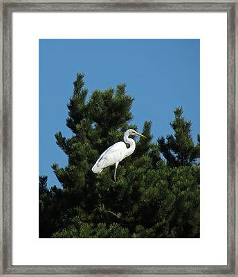 Treed Framed Print by Chris Anderson