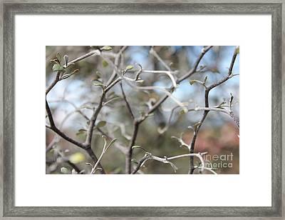 Trees Framed Print