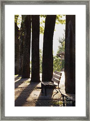 Trees And Bench Framed Print by Jeremy Woodhouse