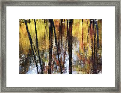 Trees And Fall Foliage Reflected Framed Print by Medford Taylor