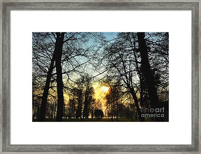 Trees And Sun In A Foggy Day Framed Print