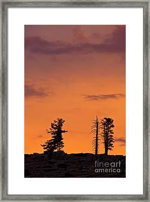 Trees At Sunset Framed Print