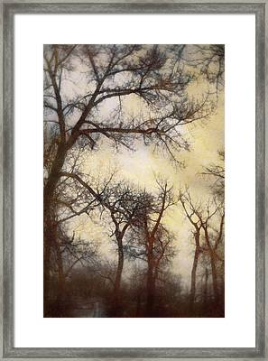 Trees  Framed Print by Diane Dugas