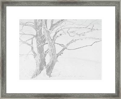 Trees In A Snow Storm Framed Print by David Bratzel