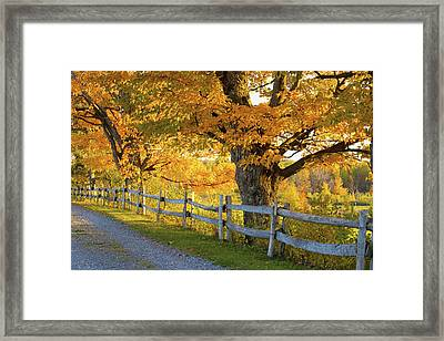 Trees In Autumn Colours And A Fence Framed Print by David Chapman