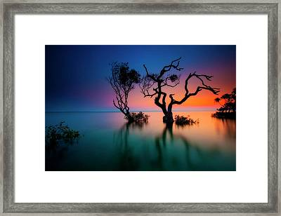 Trees In Bay At Sunset Framed Print by Visionandimagination.com