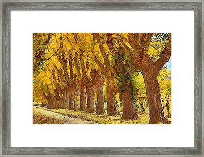Trees In Fall - Brown And Golden Framed Print