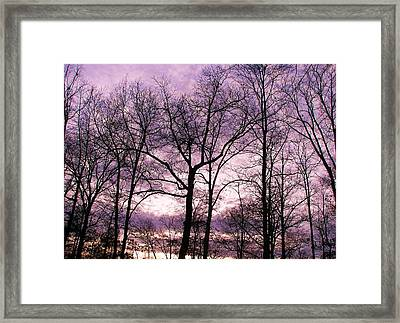 Framed Print featuring the photograph Trees In Glorious Calm by Pamela Hyde Wilson