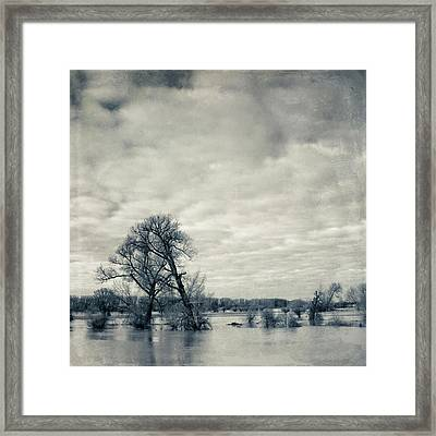 Trees In River Rhine Framed Print by Dirk Wüstenhagen Imagery