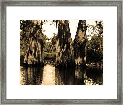 Trees In The Basin Framed Print by Maggy Marsh