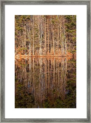 Trees In The Comfort Of Trees Framed Print by Karol Livote