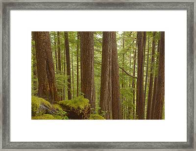Trees In The Forest Framed Print by Tim Grams