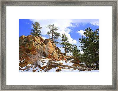Trees In The Rocks Framed Print