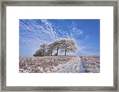 Trees In The Snow Framed Print by John Farnan