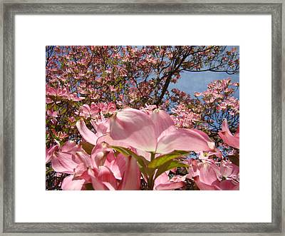 Trees Nature Fine Art Prints Pink Dogwood Flowers Framed Print by Baslee Troutman