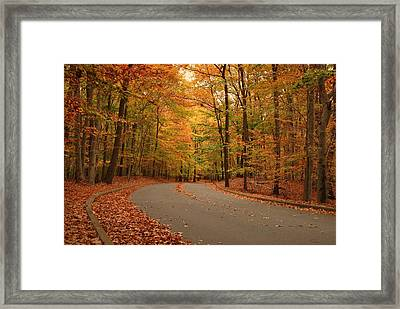 Trees Of Autumn - Holmdel Park Framed Print by Angie Tirado