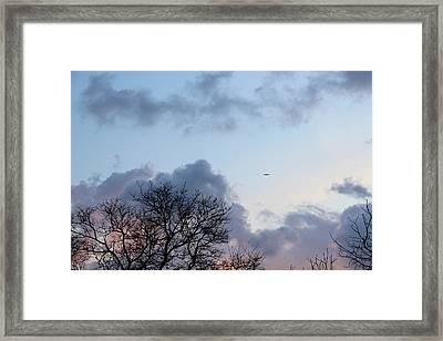 Trees On The Background Of A Cloudy Sky At Twilight Framed Print by Gal Ashkenazi
