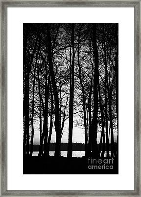 Trees On The Lough Neagh Shoreline County Antrim Northern Ireland Framed Print by Joe Fox