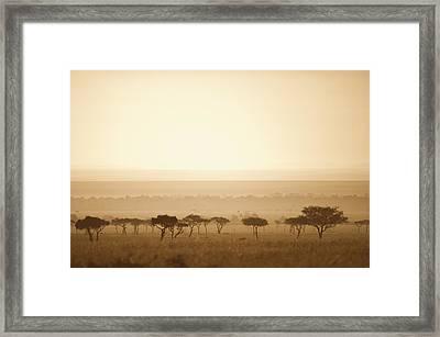 Trees On The Savannah At Sunset Masai Framed Print by David DuChemin