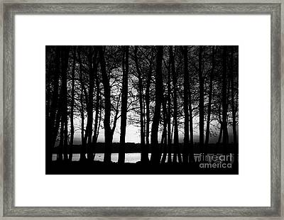 Trees On The Shore Of Lough Neagh County Antrim Northern Ireland Framed Print by Joe Fox