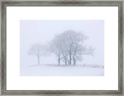 Trees Seen Through Winter Whiteout Framed Print by John Short