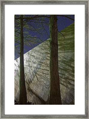 Trees Sky Shadow Framed Print by Greg Kopriva
