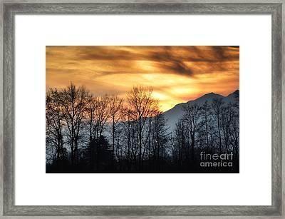 Trees With Orange Sky Framed Print