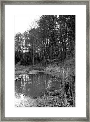 Trees With Pond Framed Print