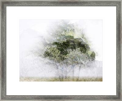 Trees Within Trees Framed Print