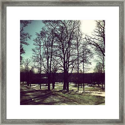 #trees #woodland #forest #sun #fall Framed Print