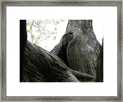 Trees Yawning Framed Print by Dennis Leatherman