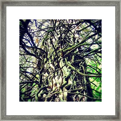 #treescollection #tree #ivy #old Framed Print