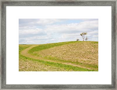 Treesome  Framed Print by Semmick Photo