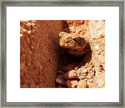 Framed Print featuring the photograph Trenched Frog by John Burns