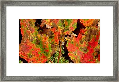 Tres Hojas Framed Print by Ed Smith