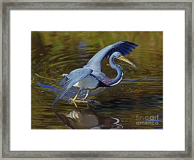 Framed Print featuring the photograph Tri-color Dance by Larry Nieland