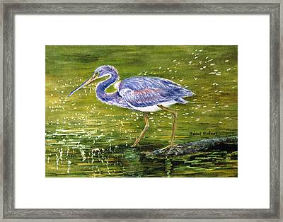 Tri Colored Heron Framed Print
