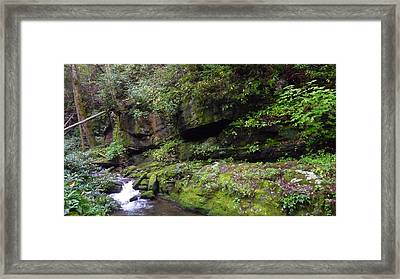 Trickle Of Green Framed Print by Michael Carrothers